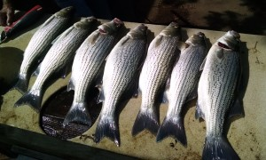 Truman Lake Fishing